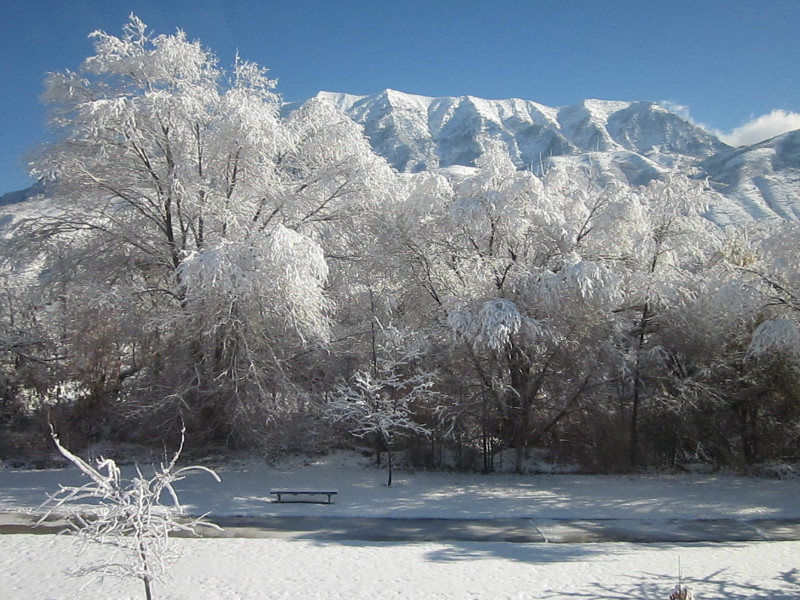 snowy trees and mountains in Provo