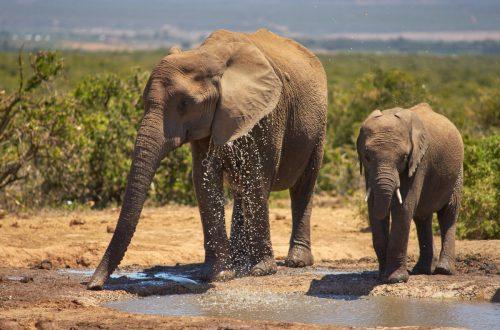 elephants October