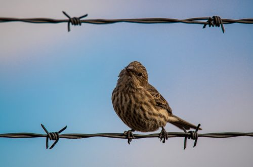 Twitter - barbed wire